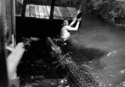 {Photo 1 de Crocodile de la Mort, le}